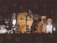 Grau de inteligência dos cães