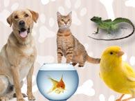Teste animal de estimação ideal